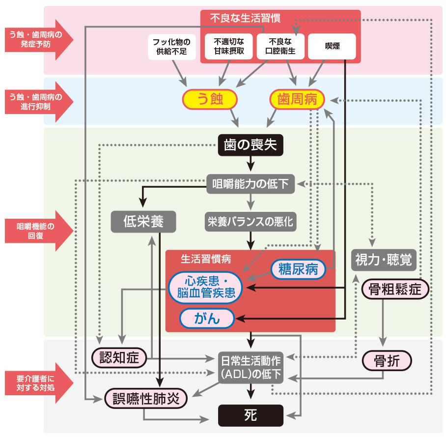 歯原性菌血症の説明図